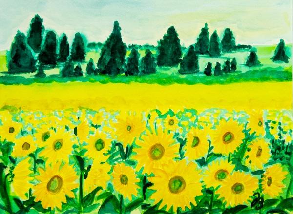 Sunflowers in Arizona